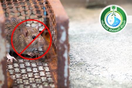 شركة مكافحة الفئران بالرياض, شركة مكافحة فئران بالرياض, افضل شركة مكافحة الفئران بالرياض, شركات مكافحة الحشرات والفئران في الرياض, شركات مكافحة الحشرات والفئران بالرياض, رش الفئران, رش الفئران بالرياض